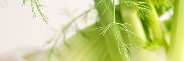 Fennel:  My New Best Frond